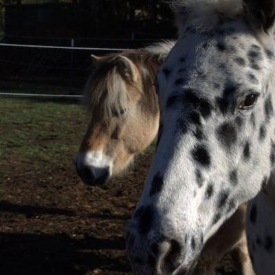 Barhuf oder Eisen – was ist besser für mein Pferd?