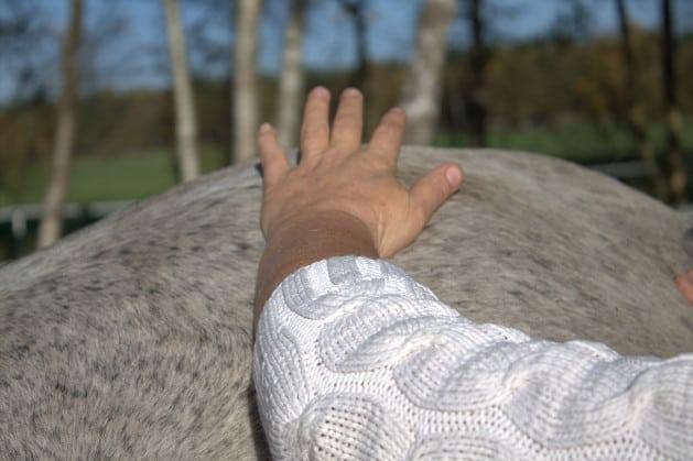 Hand auf der Kruppenmuskulatur des Pferdes