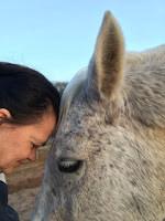 Pferde sind unsere Spiegel