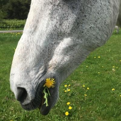 Pferde richtig Anweiden