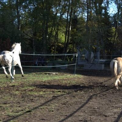 Was halten Pferde von Heunetzen?