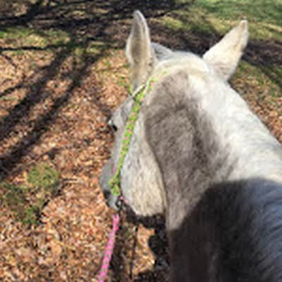 Steifer Nacken – steifes Pferd